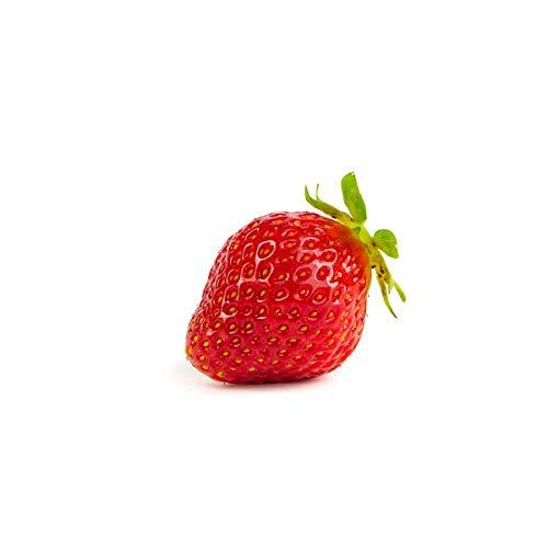 20 Korona Erdbeerpflanzen - Frigo Pflanzen - Pflanzzeit: März/April - Ernte: Juni - Erdbeersetzlinge/Erdbeerstecklinge - Erdbeerprofi.de