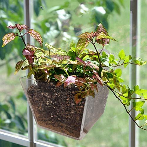 LACKINGONE Acryl Pflanztopf Blumentopf, hängender Blumentopf mit Saugnapf, Fensterregal, praktischer Fenster Ablagekasten zum Aufhängen, Dekor Pflanzentopf für Gemüse, Blumen, Sukkulenten (1 Gitter)