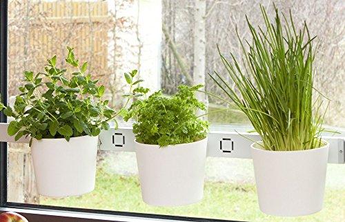 Kräuterleiter Pflanzenleiter Kräutergarten VEGA weiß Fenster- und Wandmontage