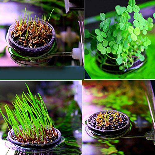 B Blesiya Blumentopf Pflanztopf mit Saugnapf für Aquarium Fisch Tank Dekoration